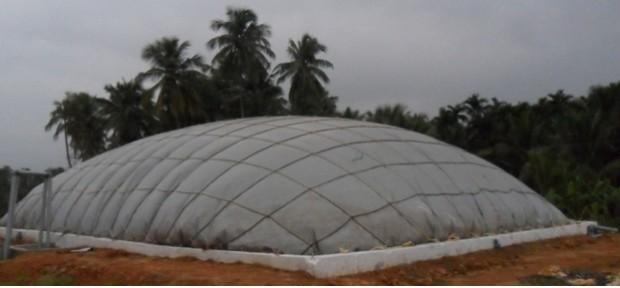 BioSago